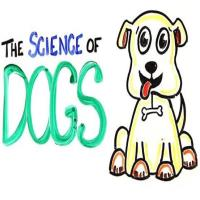 ASAP Science Dogs-min