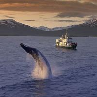 Iceland Whale Watching-min