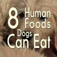 8 Foods Dogs-min