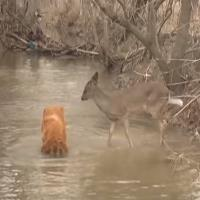 Deer and Dog Water-min