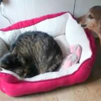 Cats Steal Dog Beds-min